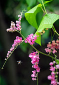 Bees pollinate pink flower in morning