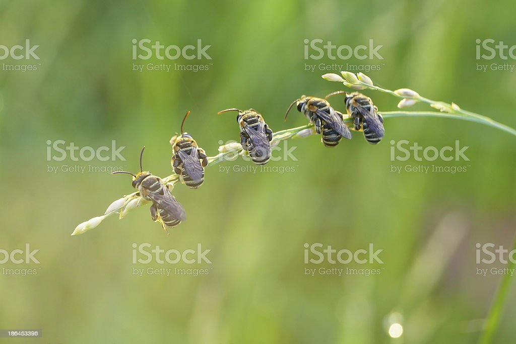 Bees sitting together on a grass royalty-free stock photo