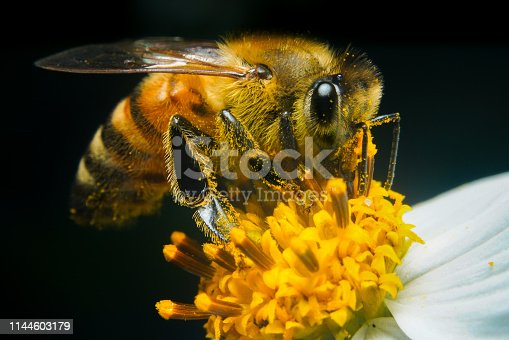 I shot a picture of a bee sucking sweet honey with a macro.