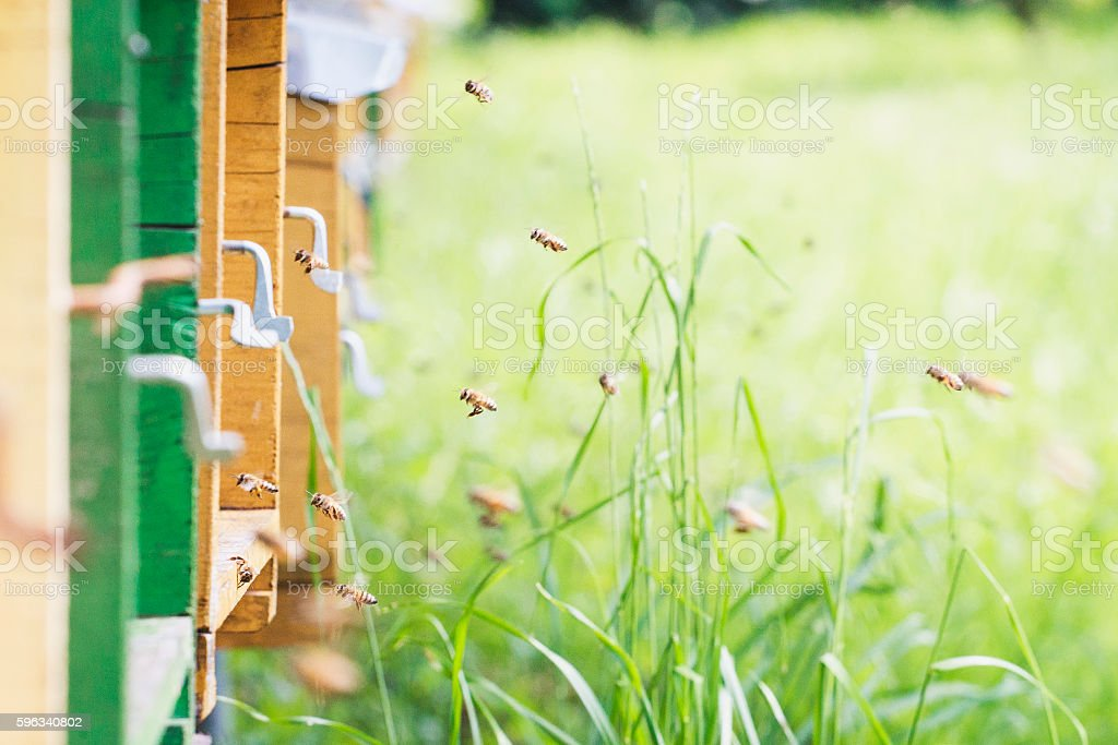 Bees work in the hive, beekeeping royalty-free stock photo