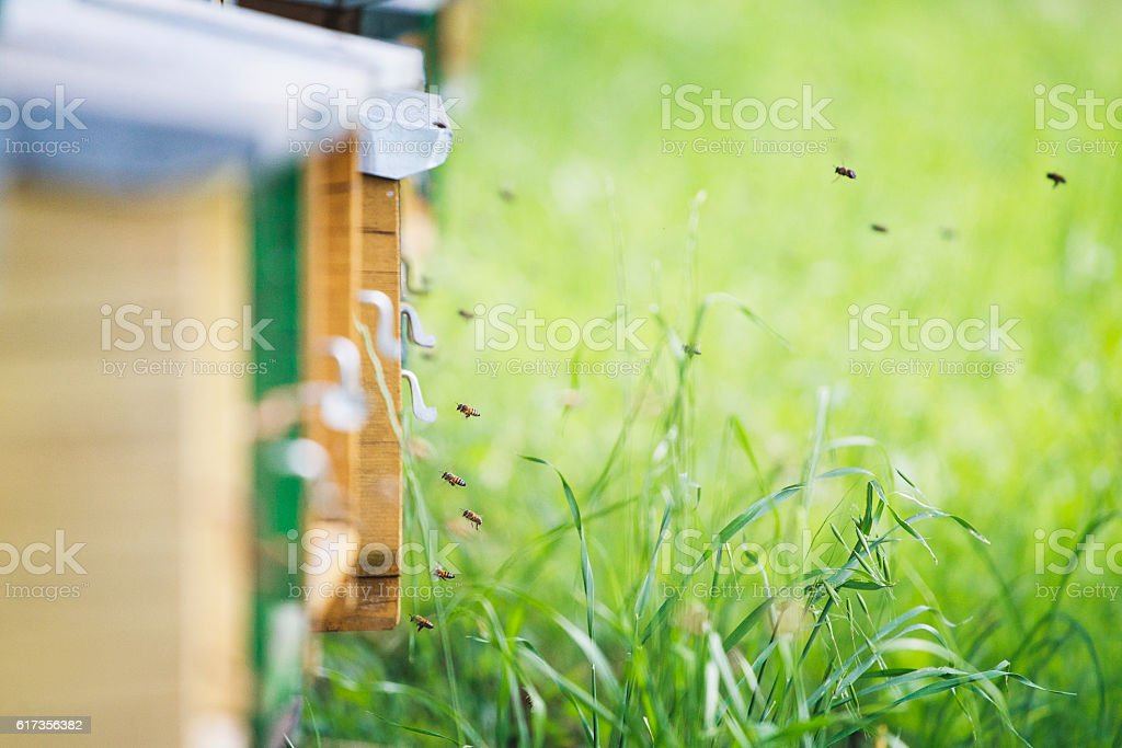 Bees work in the hive, beekeeping stock photo