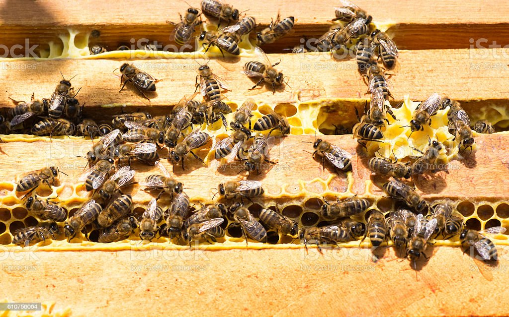 bees work on honey frames top view stock photo