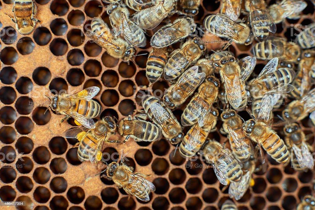 Bees work on honeycomb stock photo