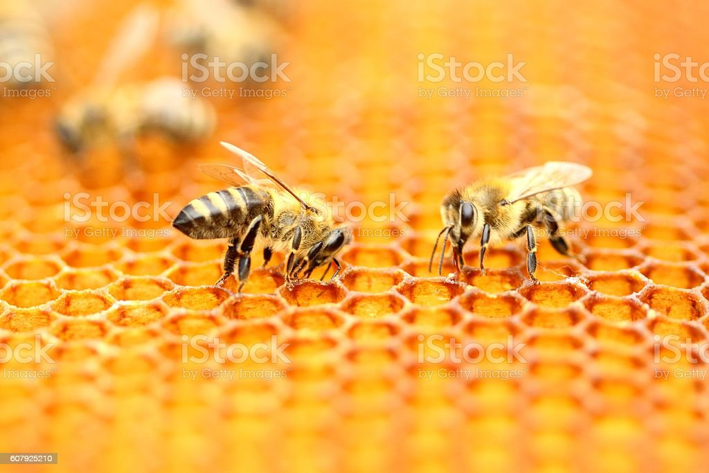 Bees workers stock photo