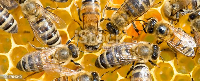Bees working, gathering honey and pollen and putting them in honeycombs during a sunny summer day.