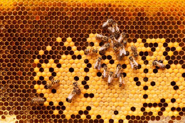 bienen arbeiten auf einer honigwabe angeordnet. - bienenstock stock-fotos und bilder