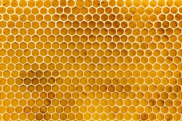 Beeswax honeycomb foundation close up stock photo