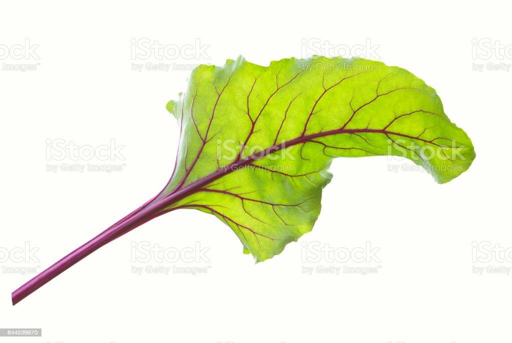 Hojas de remolacha. Hojas de remolacha, hojas de remolacha fresca aislado. - foto de stock
