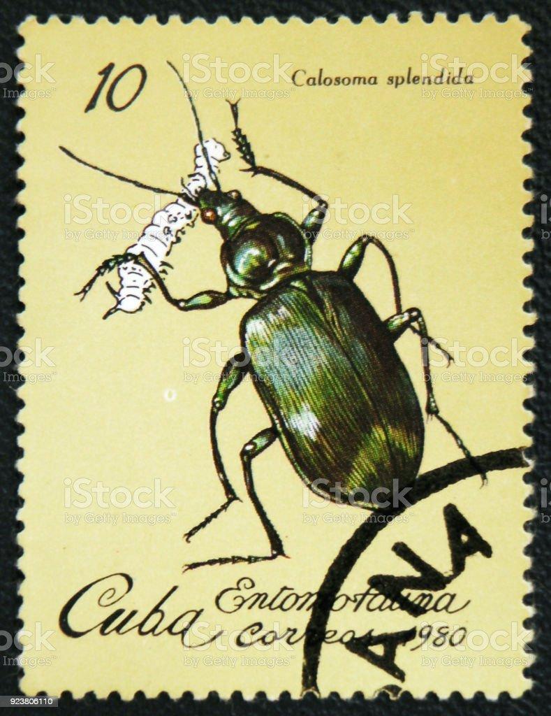 Beetle Calasoma Splendida, series insects, circa 1980 stock photo