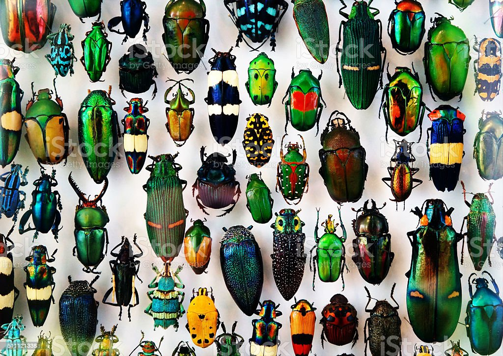 Beetle collection stock photo