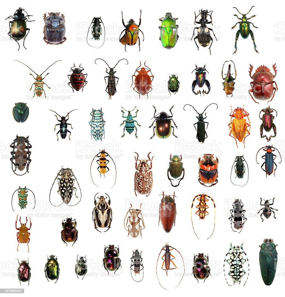 Beetle collection XXXL stock photo