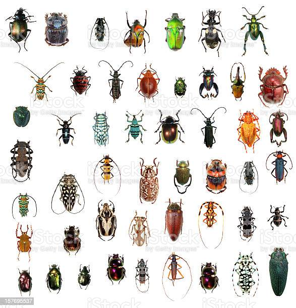 beetle collection in XXXL size, beautiful colors and shapes.