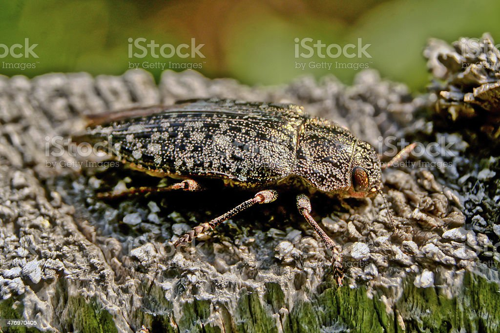 Beetle colorful painting . royalty-free stock photo