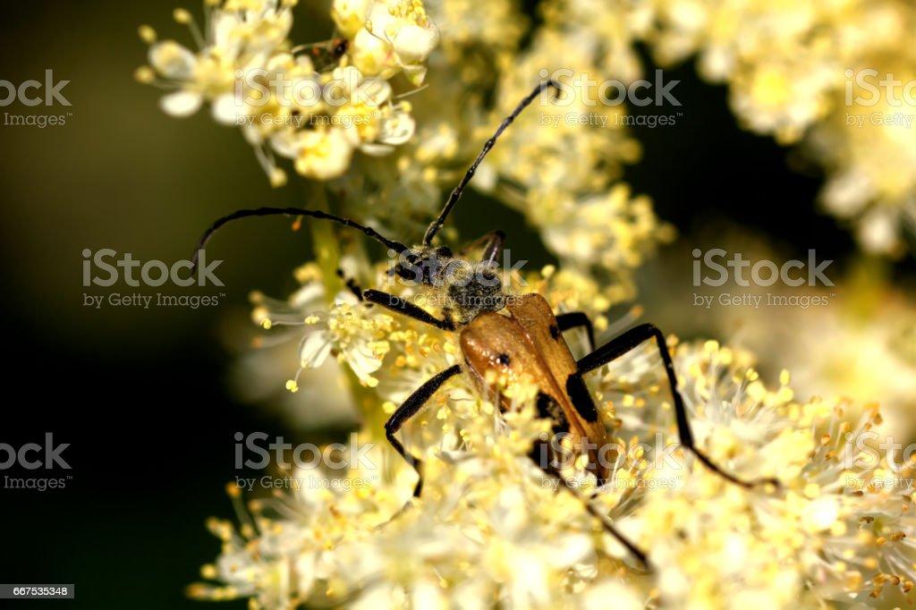 Beetle. Garden flower. foto stock royalty-free
