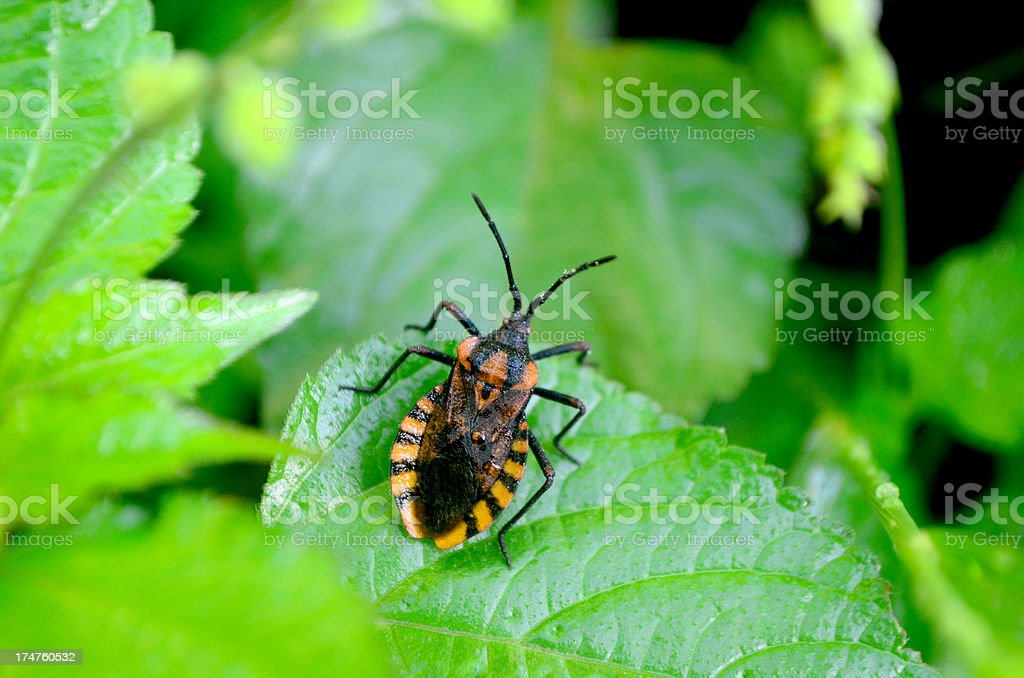 beetle in green lush bush outdoors royalty-free stock photo