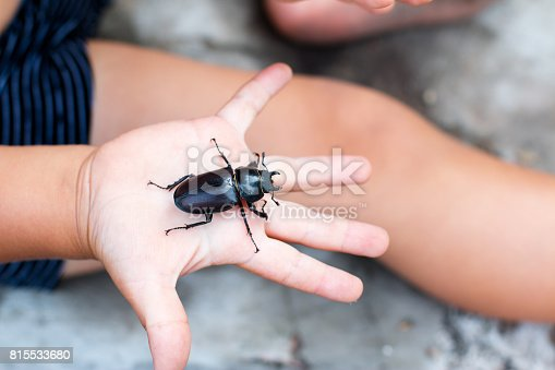 Beetle in the child's hand