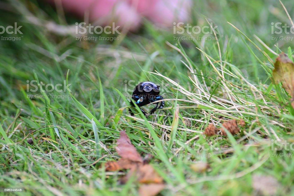 Käfer auf dem Rasen Lizenzfreies stock-foto