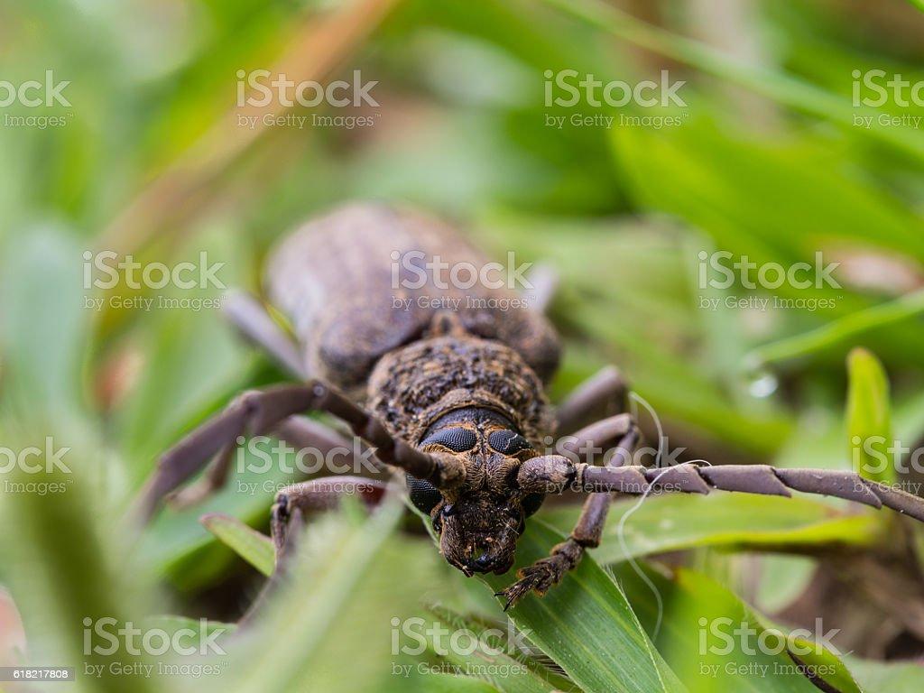 Beetle is Feeding stock photo