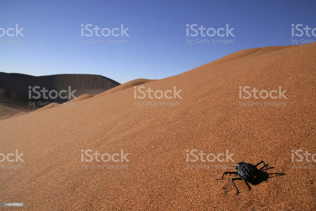 Beetle looks across expansive sand dune in Namibia stock photo