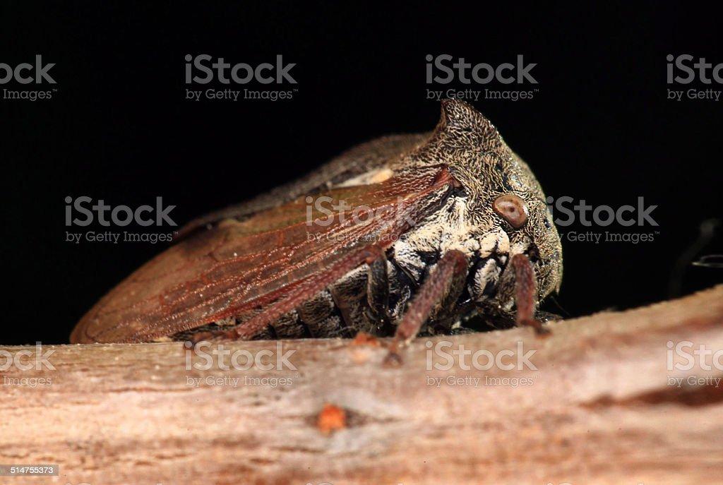 beetle macro stock photo