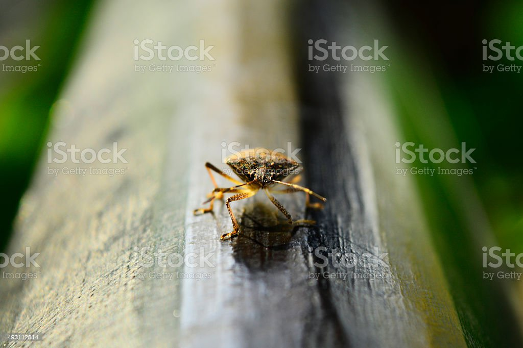 Beetle on a bench in nature stock photo