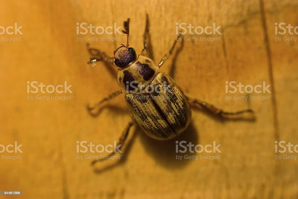 Beetle on a Porch Post royalty-free stock photo