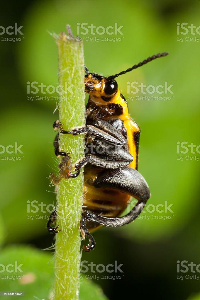 Beetle on branch stock photo