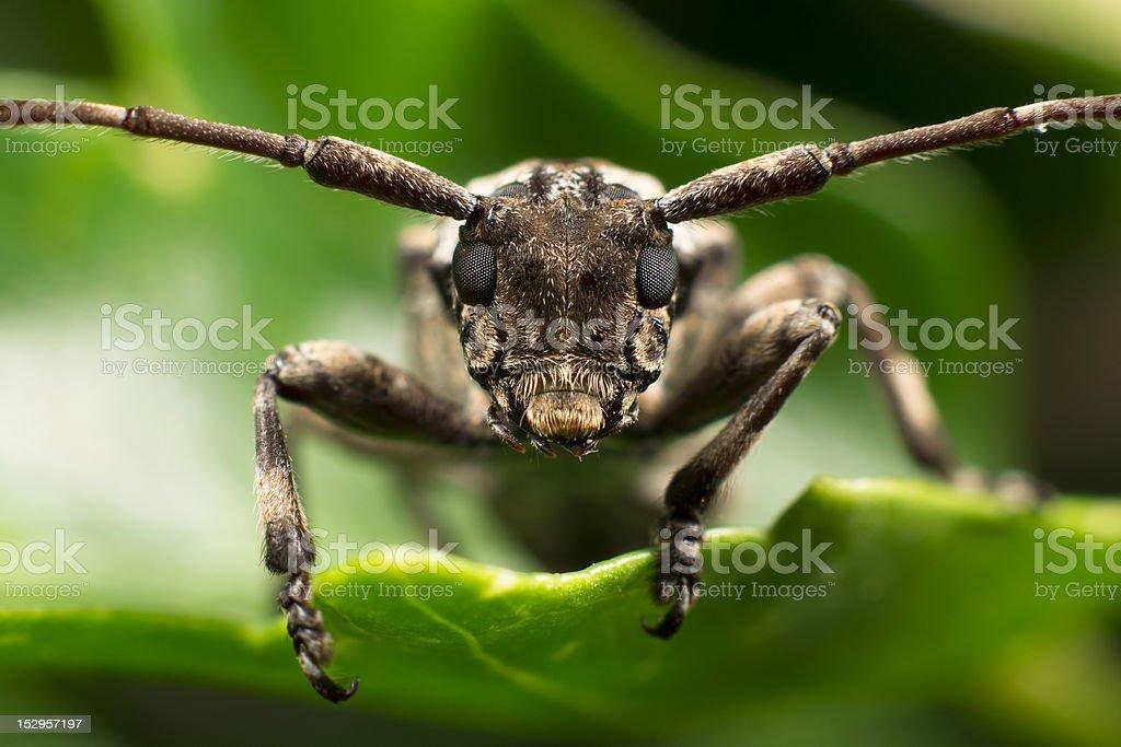 Beetle on Leaf stock photo