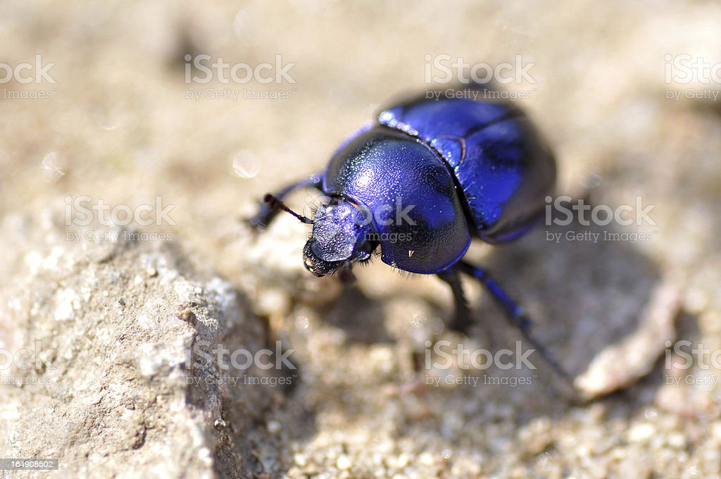Beetle on sand. royalty-free stock photo