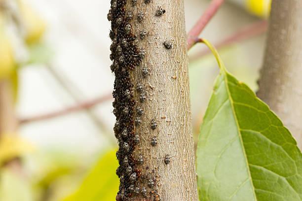 Beetle on the bark stock photo