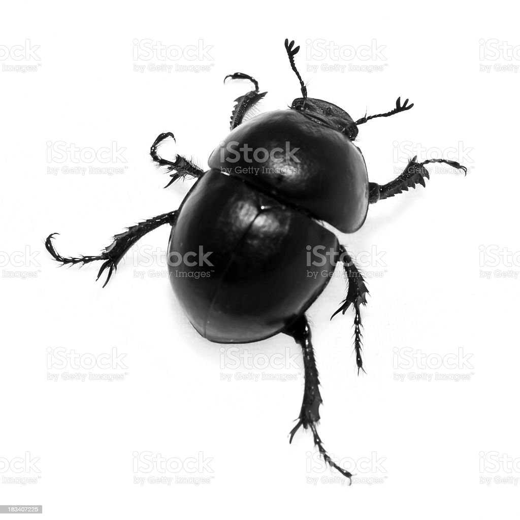 Beetle on White stock photo