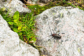 Beetle with long mustache on the rock in the forest.
