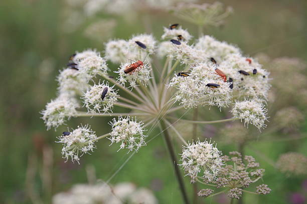 Käfer in den Frühling – Foto