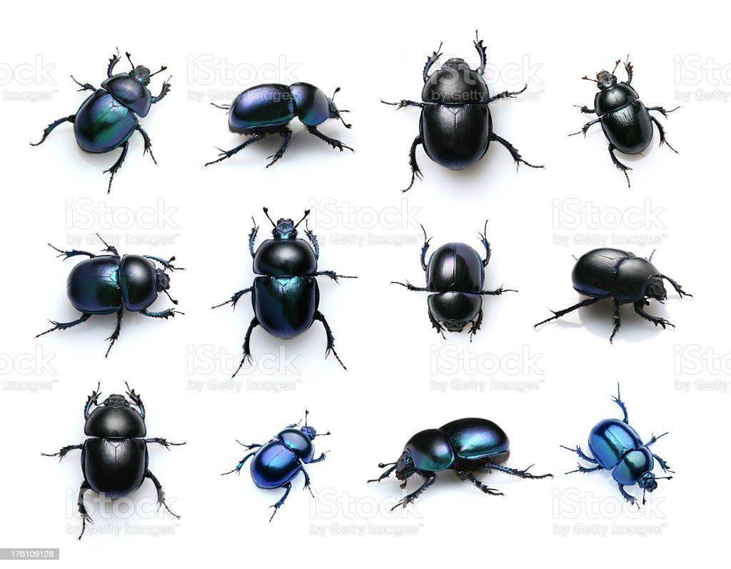 beetles - foto de acervo