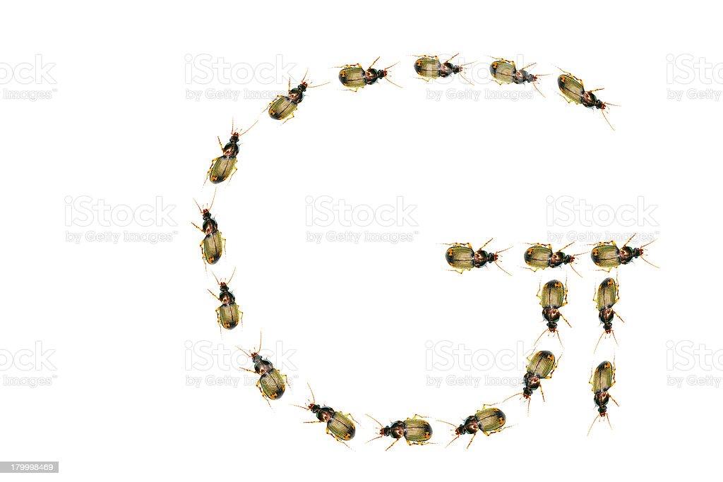 beetles royalty-free 스톡 사진