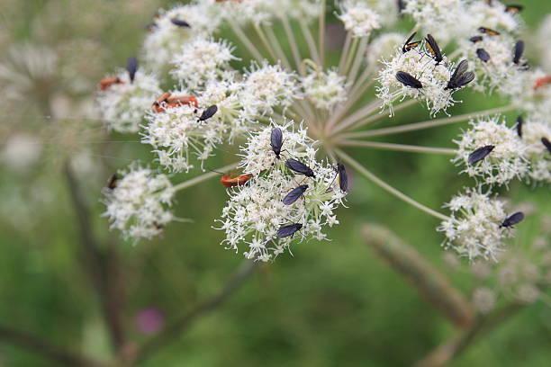 Käfer – Foto