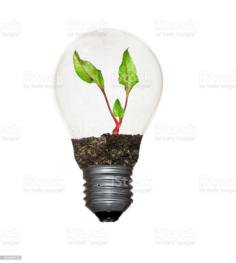 Beetroot in lamp royalty-free stock photo