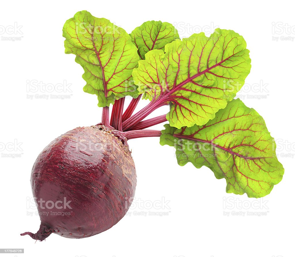 Beetroot plant with four green leaves stock photo