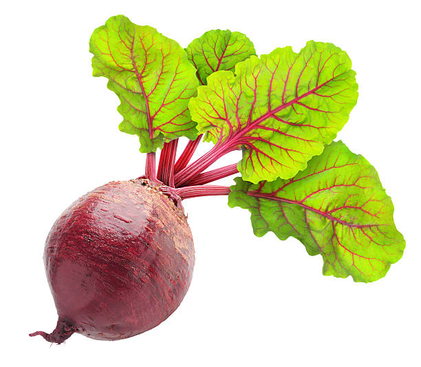 Beetroot plant with four green leaves Fresh beetroot with leaves isolated on white. beet stock pictures, royalty-free photos & images