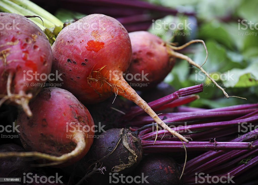 Beetroot Vegetable stock photo