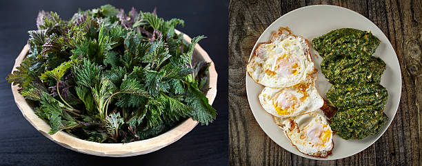 vor und nach dem kochen nesseln - eierstich stock-fotos und bilder