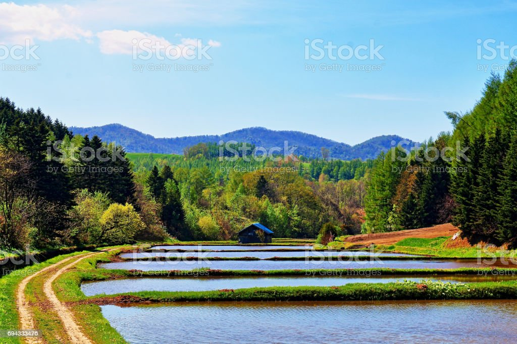 Before planting rice / Biei-cho stock photo