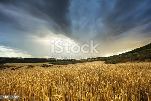 Stormy clouds over wheat field