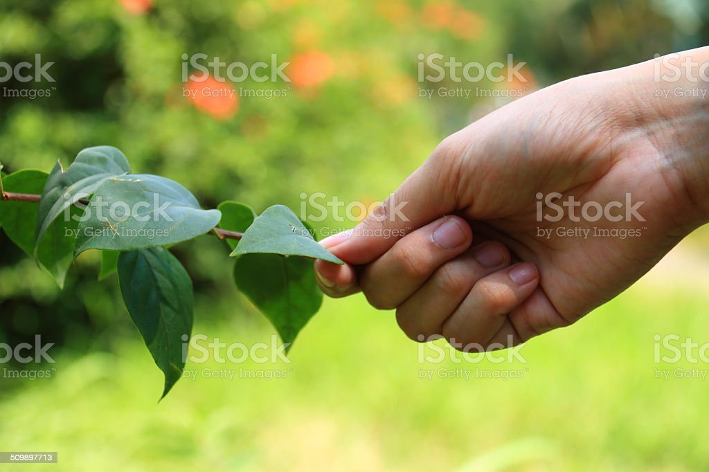 Befriend with Nature stock photo