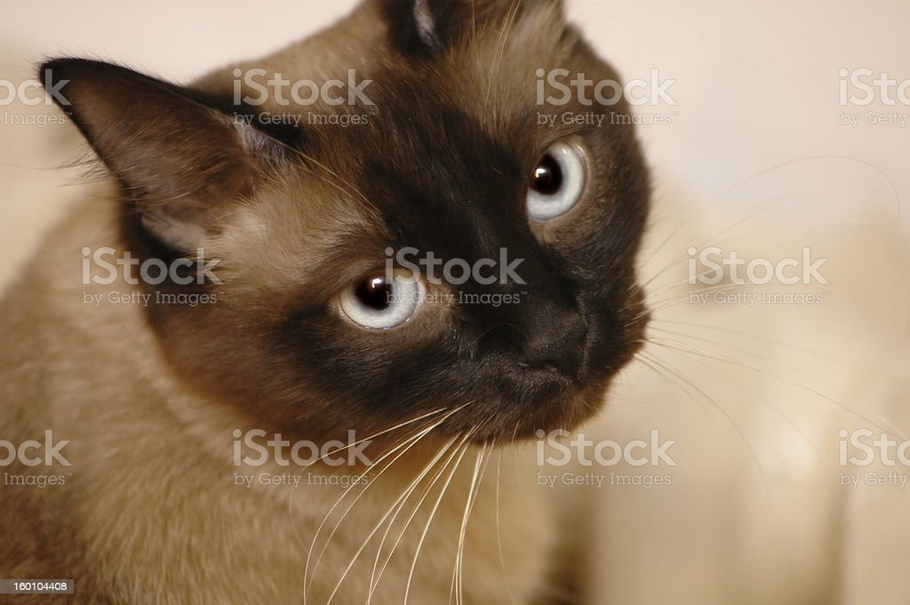 Begger cat stock photo