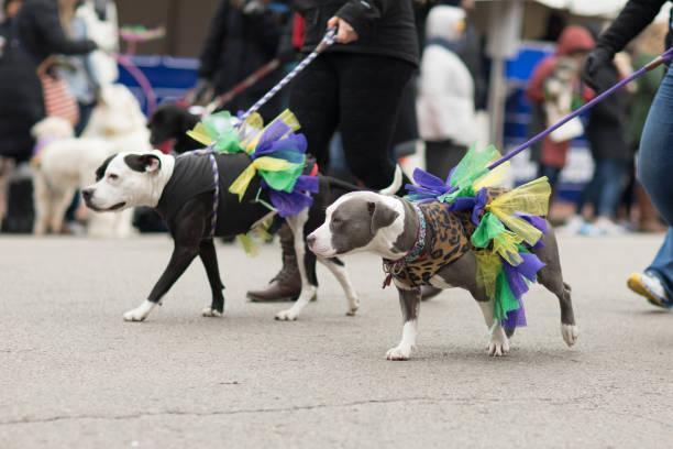 Beggin pet parade picture id914738504?b=1&k=6&m=914738504&s=612x612&w=0&h=9tqmmb rbiymywr4yv3l5jy37qvf8isr9mlqyojwv2m=