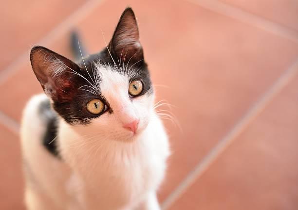 Begging cat stock photo