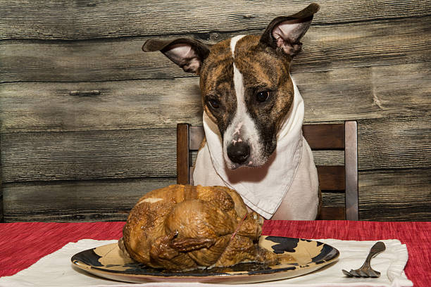 Begging for the Holiday Feast A cute dog begging for the Holiday Feast. thanksgiving pets stock pictures, royalty-free photos & images