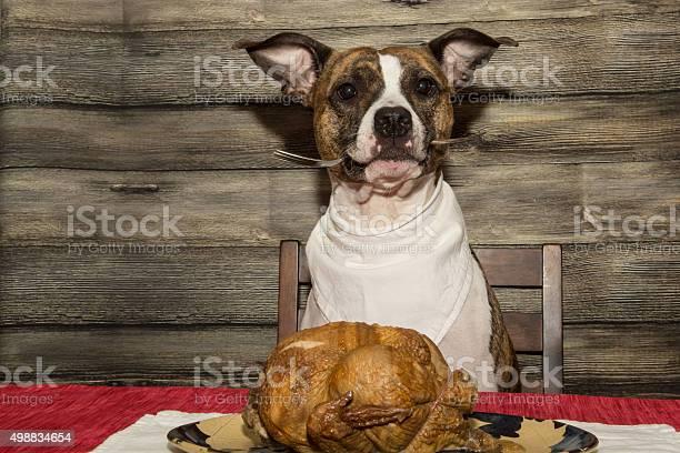 Begging for the holiday feast picture id498834654?b=1&k=6&m=498834654&s=612x612&h=q6tmzh3lgnmbfkbsq0djy nq fs kl8chenoy memya=