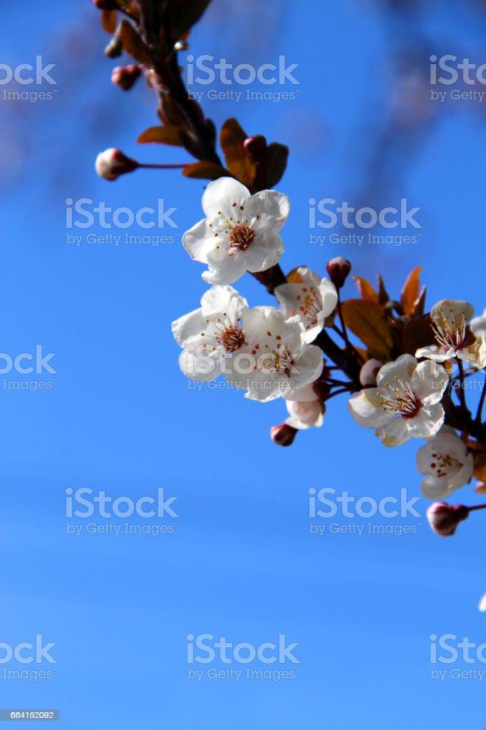Beginning Flowers foto stock royalty-free